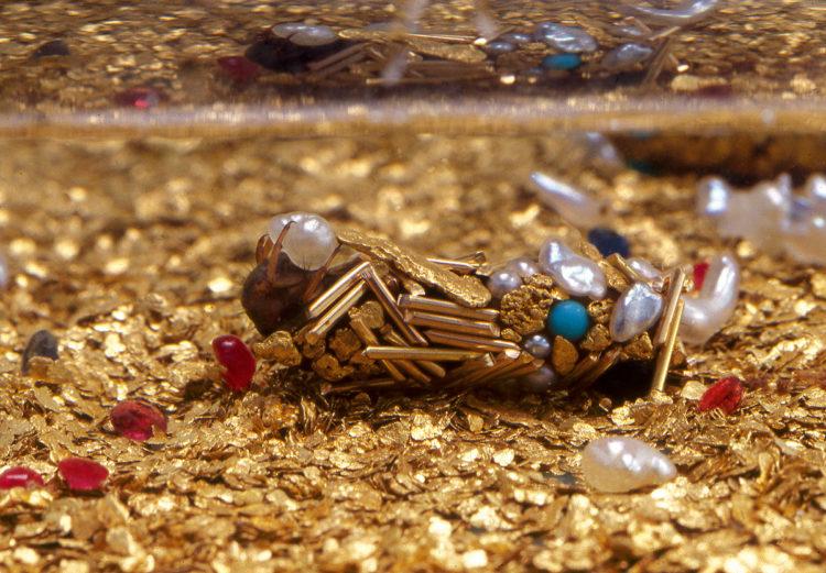 Coquillages, insectes et crustacés - Le Grand Café